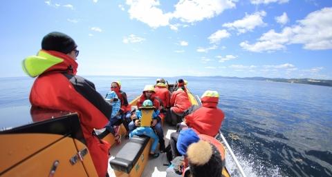 On cherche les baleines sur le Fleuve Saint-Laurent